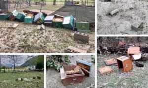 apicoltori arnie