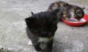 gattini mici generico